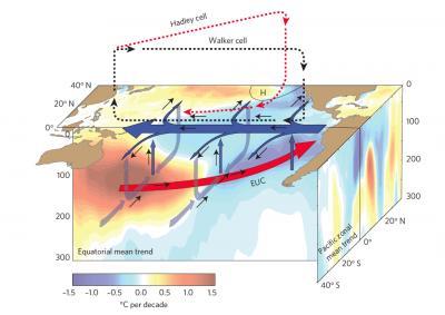 Why winds explain the global warming hiatus
