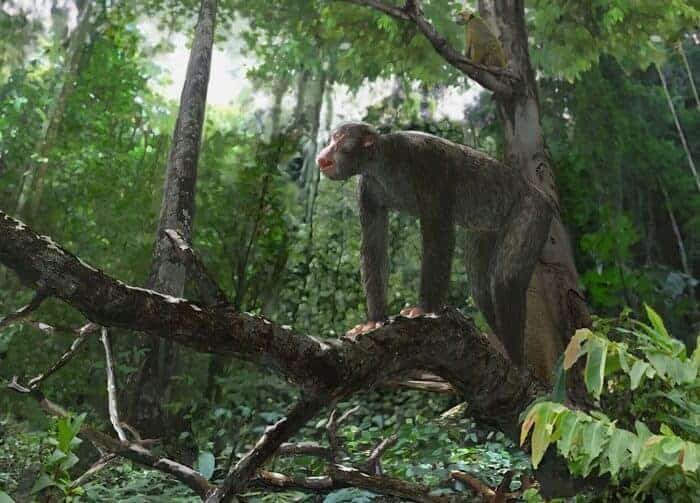 Discovery sheds new light on habitat of early apes