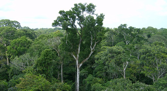 Study: Decline in forest diversity could cost billions per year