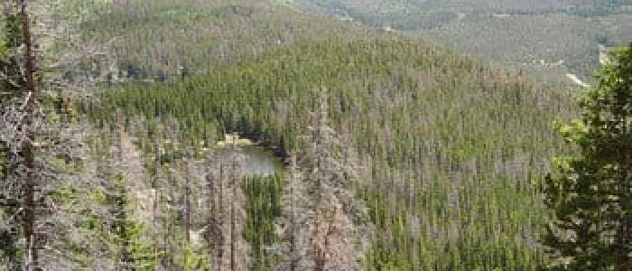 Bark beetles change Rocky Mountain stream flows, affect water quality