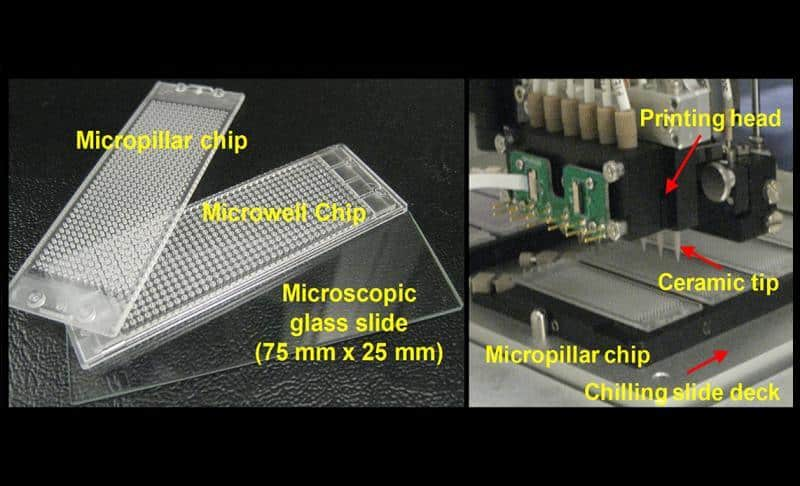 New Biochip Mimics Liver To Make Drug Discovery Faster, Easier