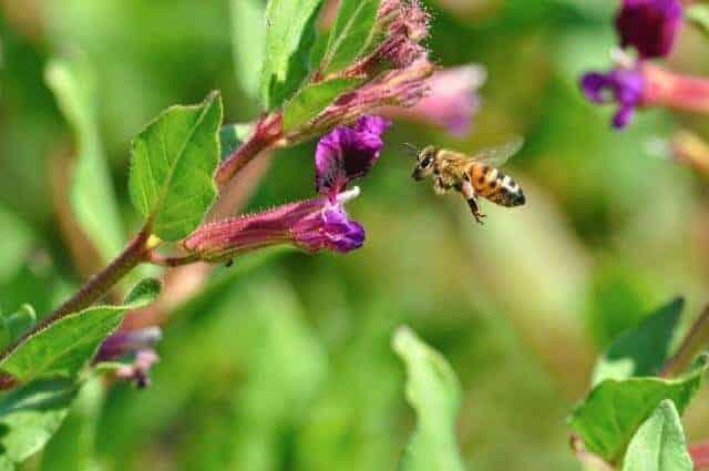 Survey Reports Fewer Winter Honey Bee Losses