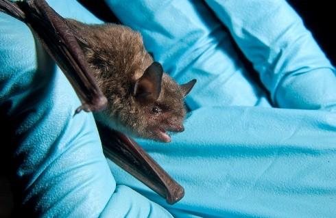 Bats make social alliances that affect roosting behavior