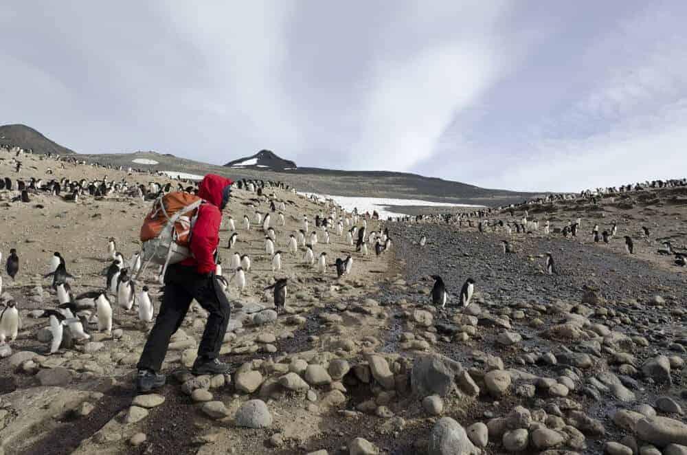 Virus found among Adélie penguin population on Ross Island
