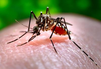Use of dengue vaccine may cause short-term spikes in its prevalence