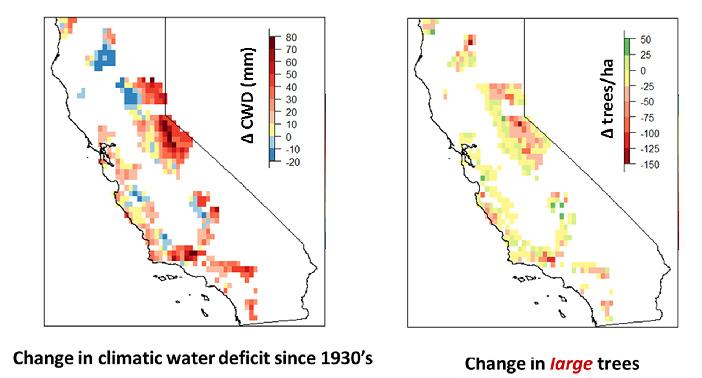 Warmer, drier climate altering forests throughout California