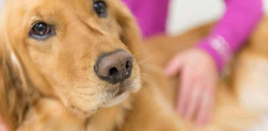 National cancer meeting unifies human and animal studies