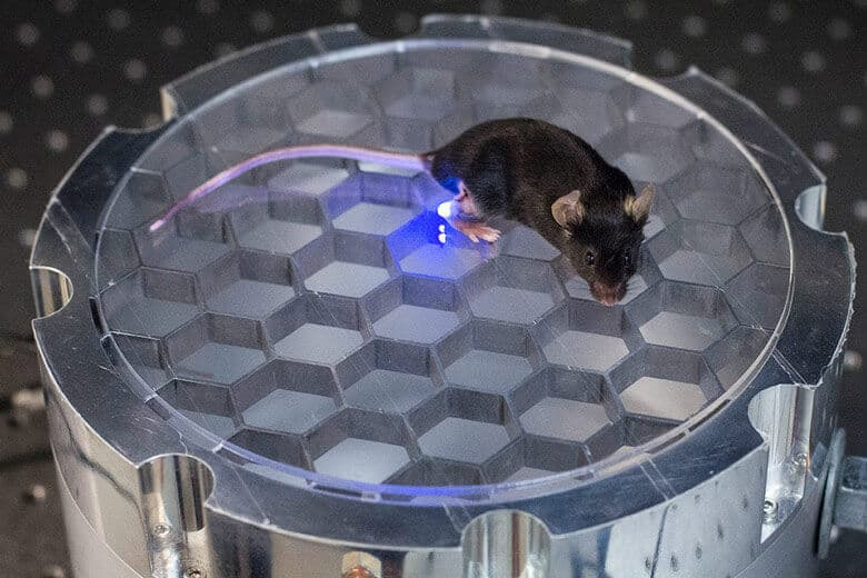 Engineers develop a wireless, fully implantable device to stimulate nerves in mice