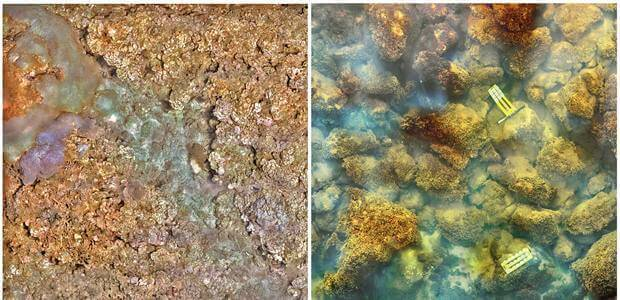 Volcano spewing carbon dioxide drives coral to give way to algae