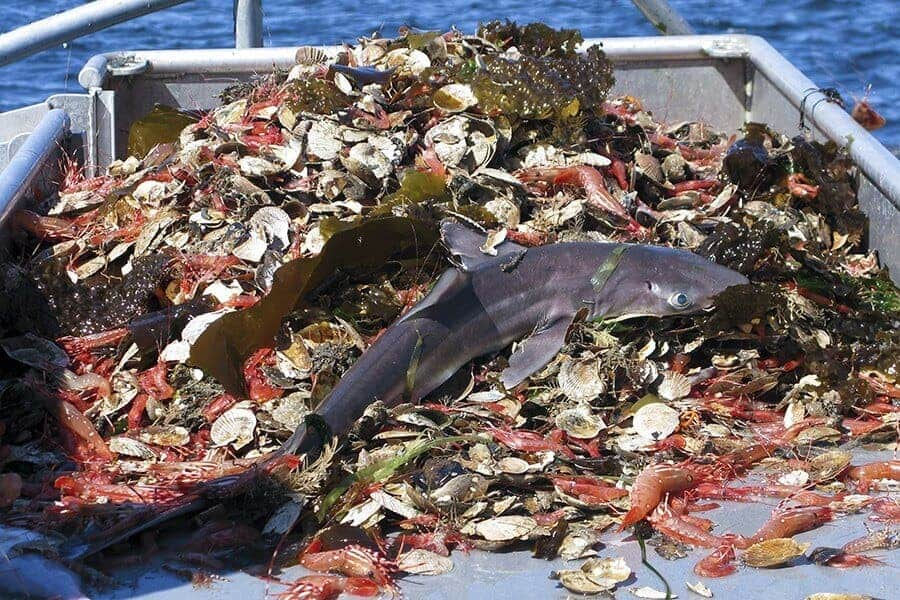 Nearly half of U.S. seafood supply goes to waste