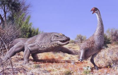 Ancient extinction of giant Australian bird points to humans