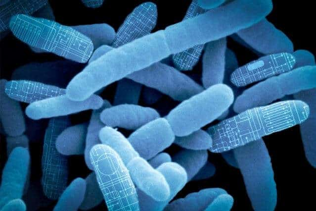 Reprogramming gut bacteria as 'living therapeutics'