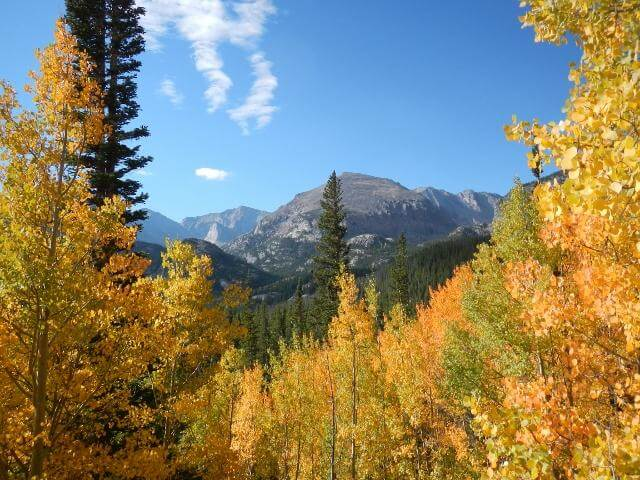 N. American forests unlikely to save us from climate change