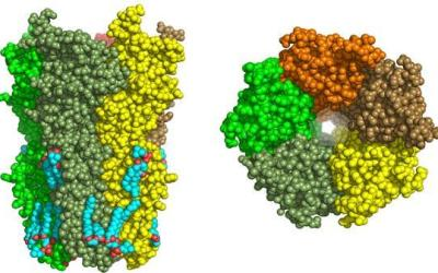 Alzheimer's: Nicotinic receptors as a new therapeutic target