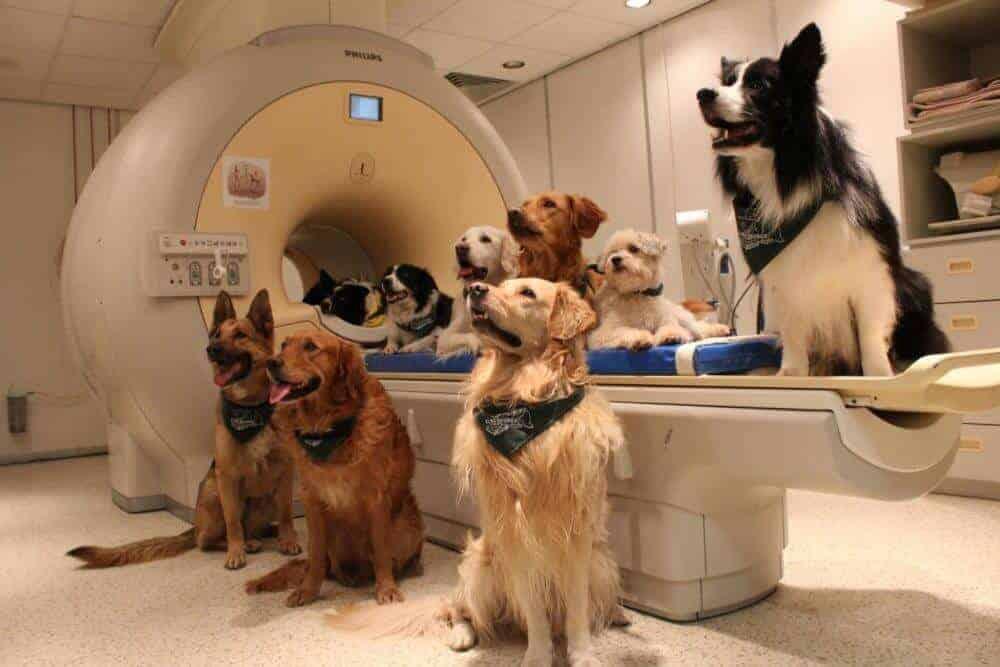 Dogs understand both vocabulary and intonation of human speech