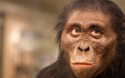 How the most famous human ancestor died