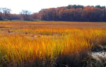 Changing salt marsh conditions send resident microbes into dormancy