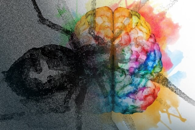 Pinpointing a brain circuit that can keep fears at bay