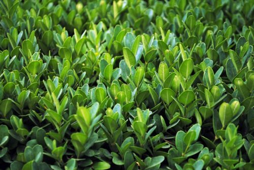 Nanoparticle fertilizer could contribute to new 'green revolution'