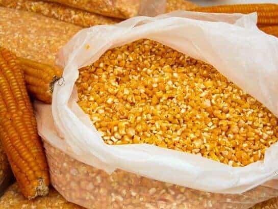 Vitamin A Orange Maize Improves Night Vision
