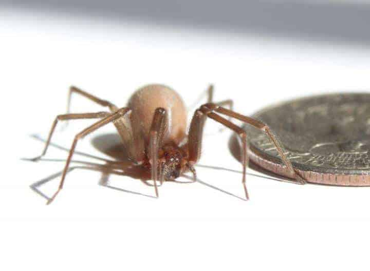 Deadly spider's unique spinning technique could inspire tougher materials