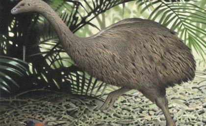Resurrecting extinct species might come at terrible cost
