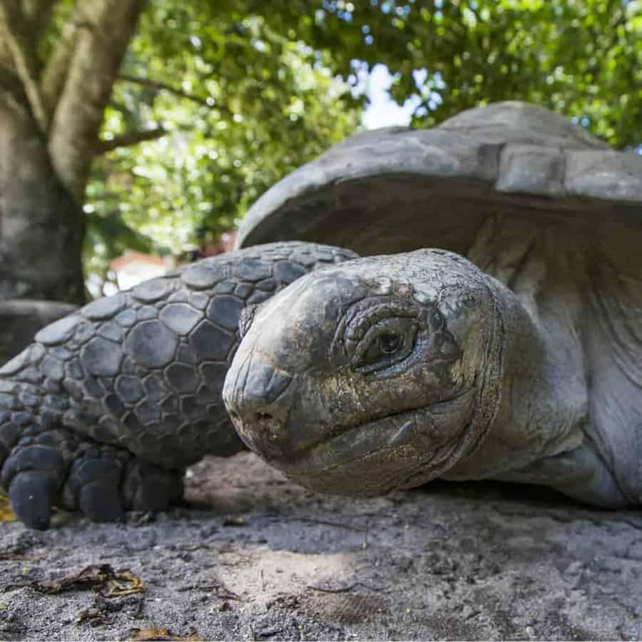 Extinct tortoise yields oldest tropical DNA