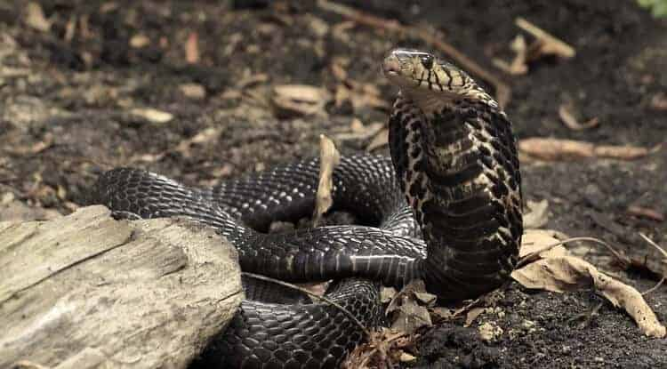 Alliance to Address African Antivenom Crisis