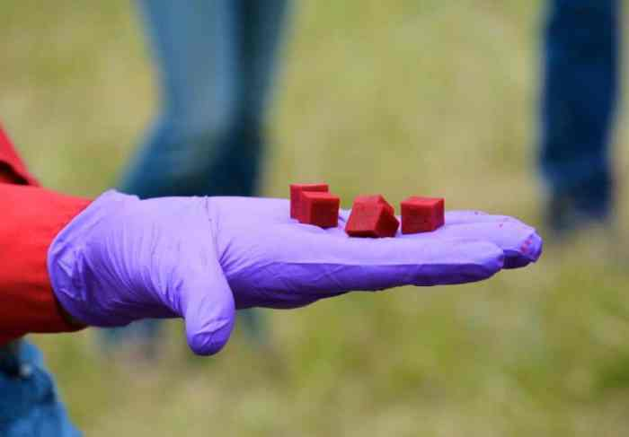 Oral Plague Vaccine Helps Reduce Outbreaks in Prairie Dog Colonies
