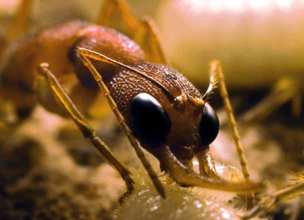 Mutant ants provide insights into social interaction