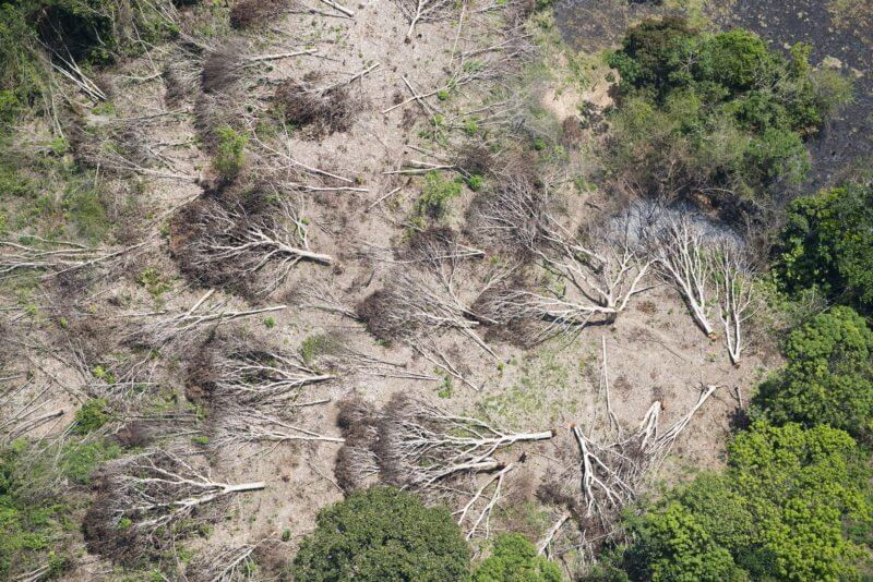 Forest loss means tropics emit more carbon than they trap