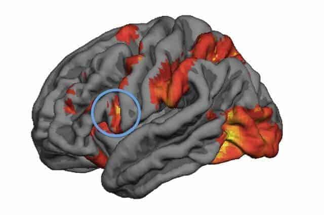 Mirror neuron activity predicts people's decision-making in moral dilemmas