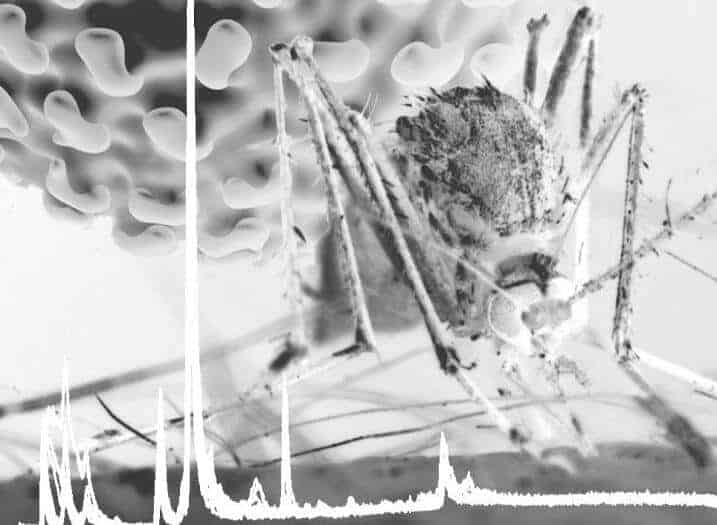 Mosquito gut may hold the key to preventing Dengue and Zika