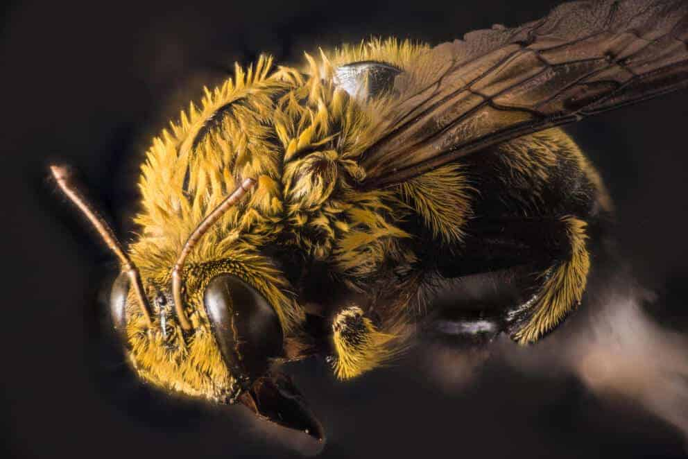 Scientists find evidence of 27 new viruses in bees