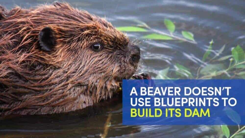 Rough terrain? No problem for beaver-inspired autonomous robot