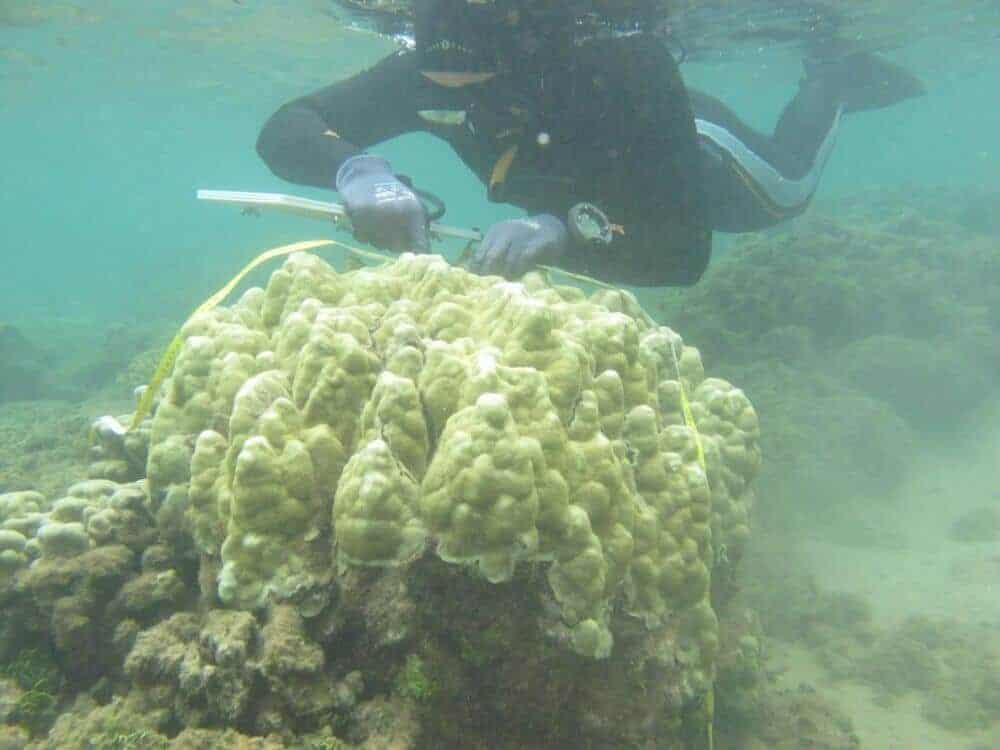 Corals are becoming more tolerant of rising ocean temperatures