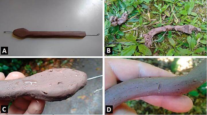 Study on jararaca pit vipers links 'giant' specimens proliferation to predators