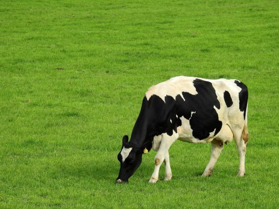 Markers of dairy fat consumption linked to lower risk of type 2 diabetes