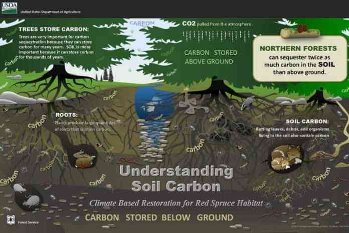 Six feet under: Deep soil can hold much of the Earth's carbon
