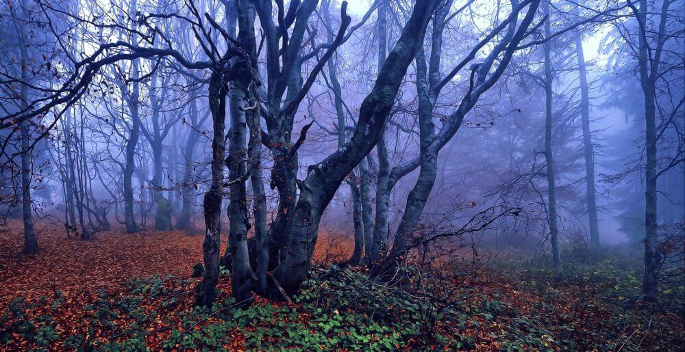 Beech trees are dying, and nobody's sure why
