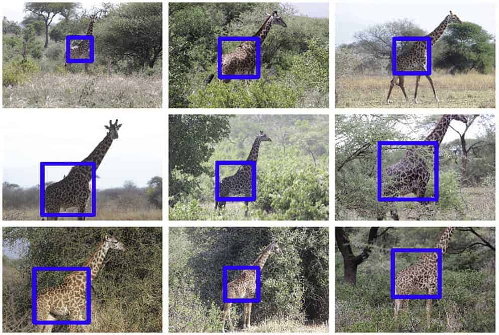 Moving toward automated animal identification in wildlife research