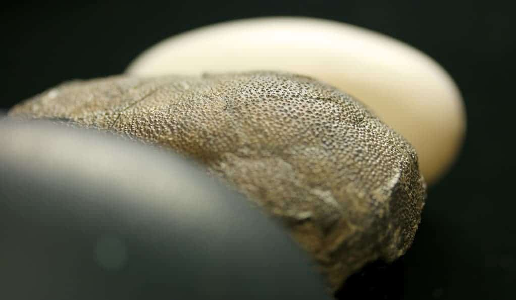 A second look at the color of dinosaur eggs