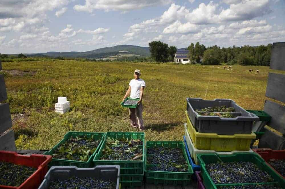 A price subsidy for organic fruits: Good economics, or not?