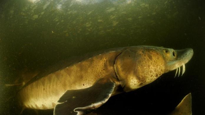 88% decline of big freshwater animals