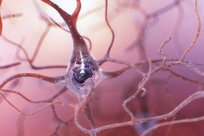 New hippocampal neurons continue to form in older adults, including those with MCI, Alzheimer's