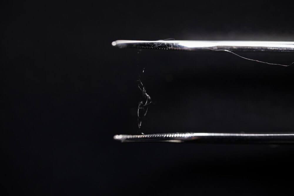 Wood fiber, spider silk combo could rival plastic