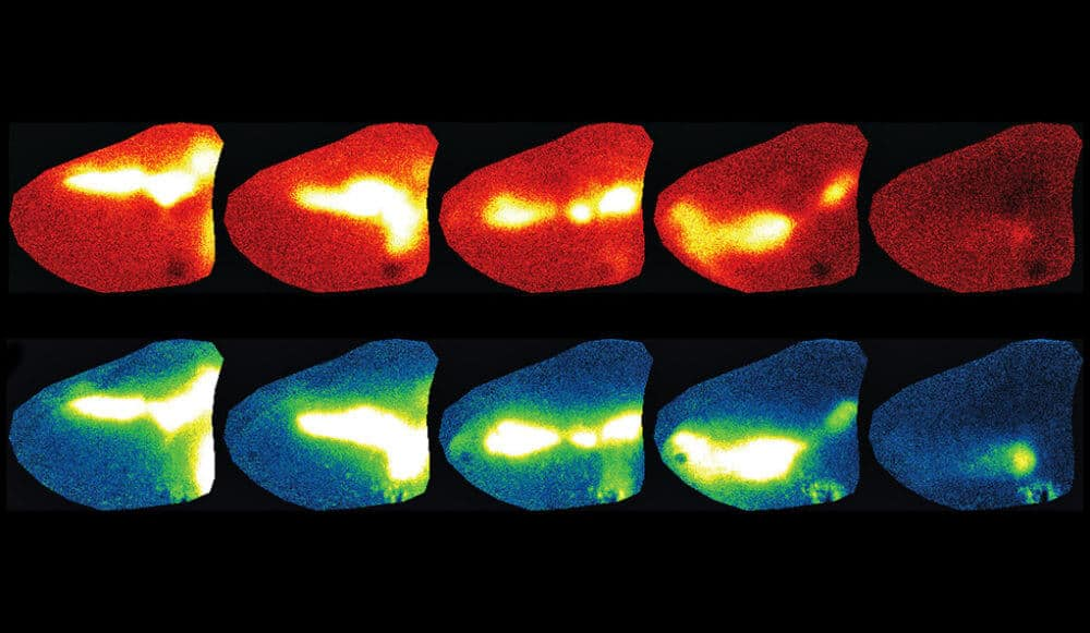 Mammals' enhanced capacity to see emerges early in development