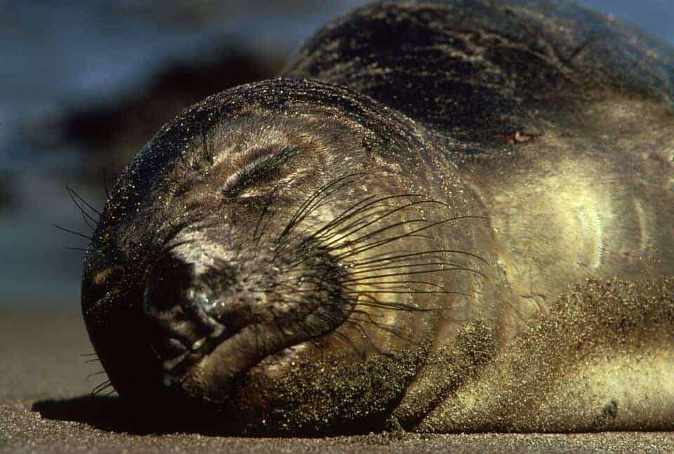 Elephant seal 'supermoms' produce most of the population