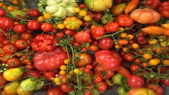Tracing evolution of the domesticated tomato