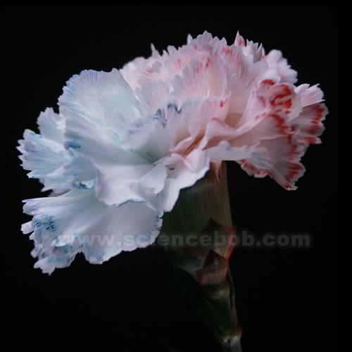 color_flower_split